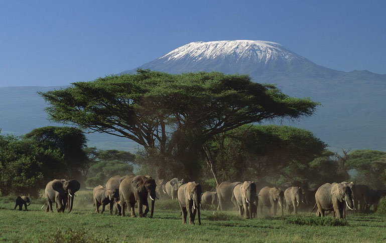 Bron: https://nomadtours.co.za/discover/highlights/amboseli-national-park/