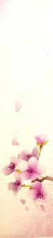 Sakura'19-1  30x7cm
