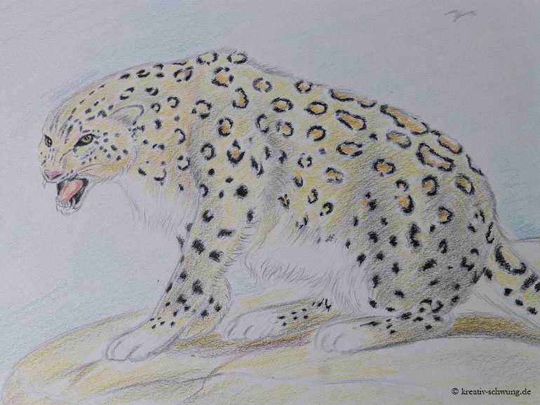 Panthera uncia, Buntstifte