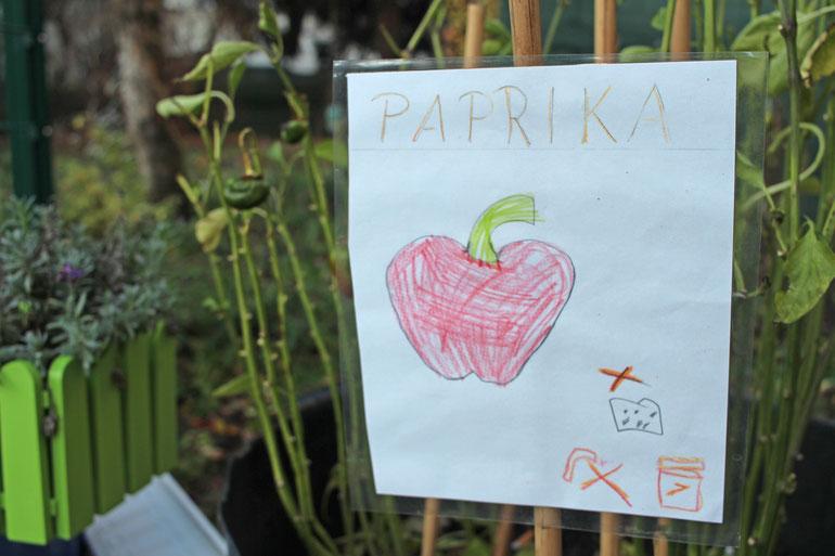 Die Kinder pflanzen Paprika an. Im großläufigen Außenbereich der Kita haben die Kinder eine grüne Oase mitten in der Stadt.