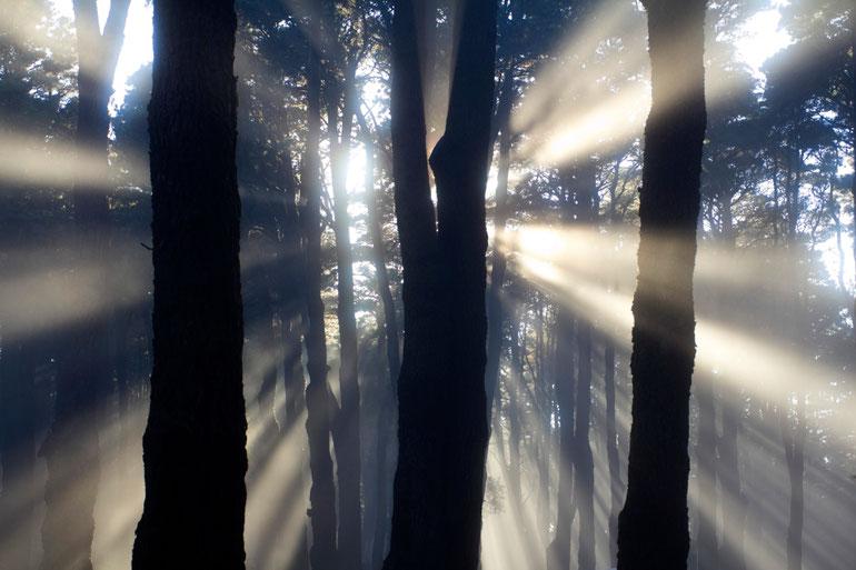 Debesų miškas La Palmos saloje / Foto: Kristina Stalnionytė