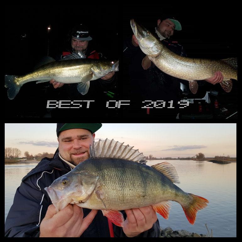 Teamer Benny fing viele und sehr gute Fische 2019...Einsatz wird belohnt! Petri
