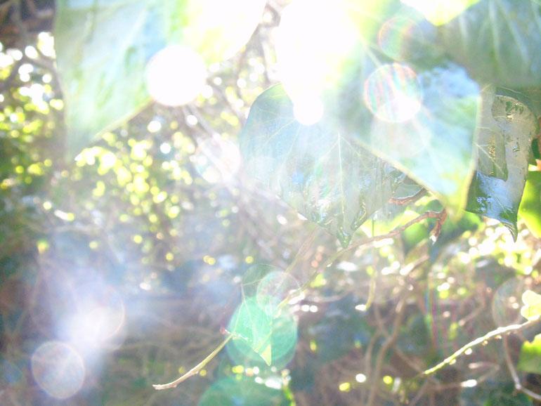 Frühlingssinfonie aus zarten, kristallinen Energiekugel