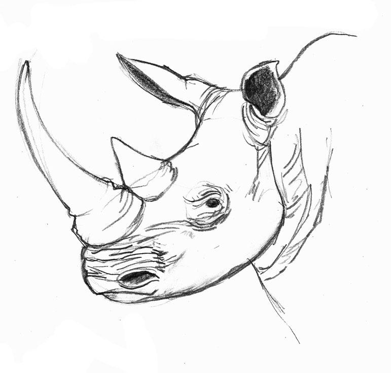 design illustration melanie suter bleistift  nashorn natur zeichnung handgezeichnet analog