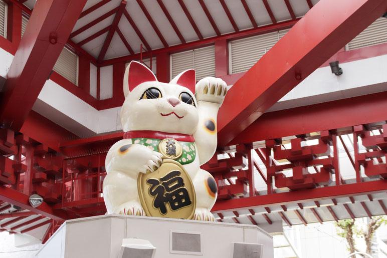 名古屋の猫さん。