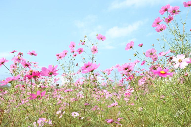 京都市下京区四条烏丸にある、女医による心療内科、コスモス