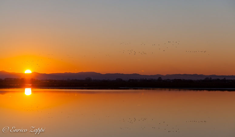 Volpoche in volo al tramonto sulle Saline di Cervia