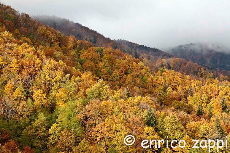 Colori dell'autunno in Campigna