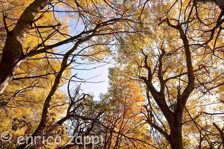 Ronco del Cianco: in mezzo al bosco dorato