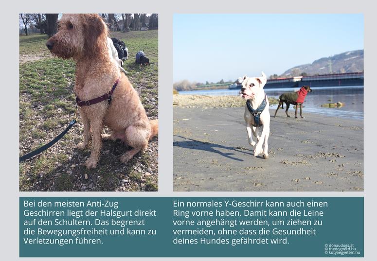 Anti-Zug-Geschirre können die Bewegungsfreiheit deines Hundes einschränken und zu Verletzungen führen.