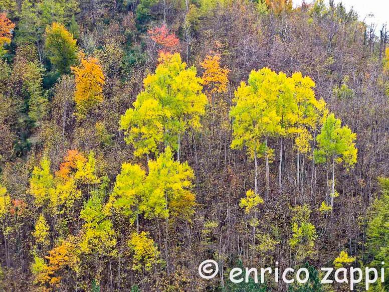 Giallo d'autunno