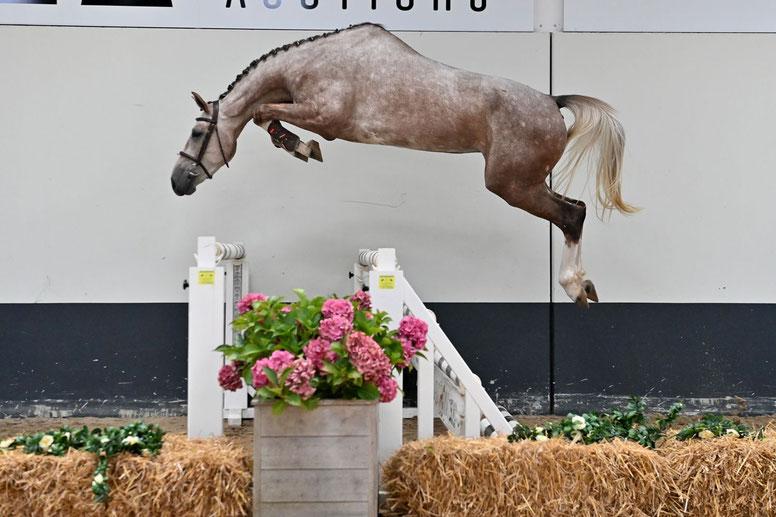 De 3-jarige Narlinia-F (Glasgow van 't Merelsnest x Zürich) lijkt een buitengewoon paard voor de toekomst