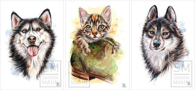 Huskys - Katze | huskys - cat