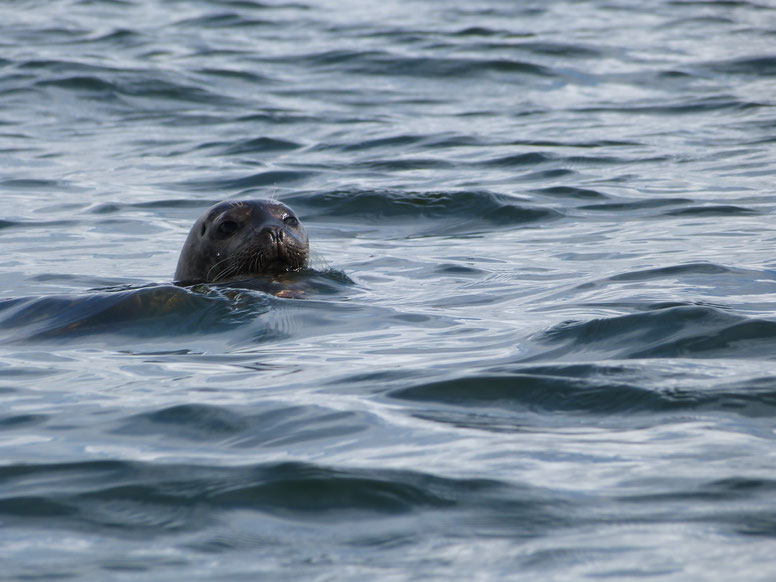 seal, the dower house, isle of islay, scotland
