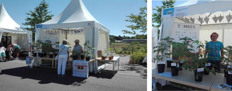Eindrücke des Sommerfests. Jan Ellenberger und Simone Röhlen-Schmittgen präsentieren Ergebnisse des TOMRES Projekts am Beispiel gestresster Tomatenpflanzen.