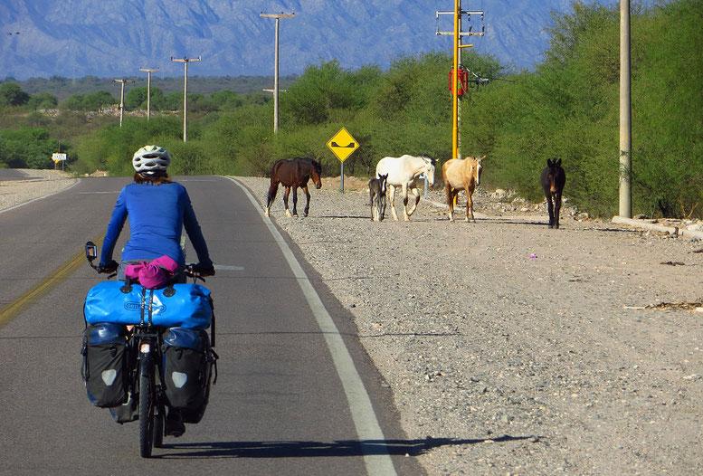 Argentinien, Land der Pferde.