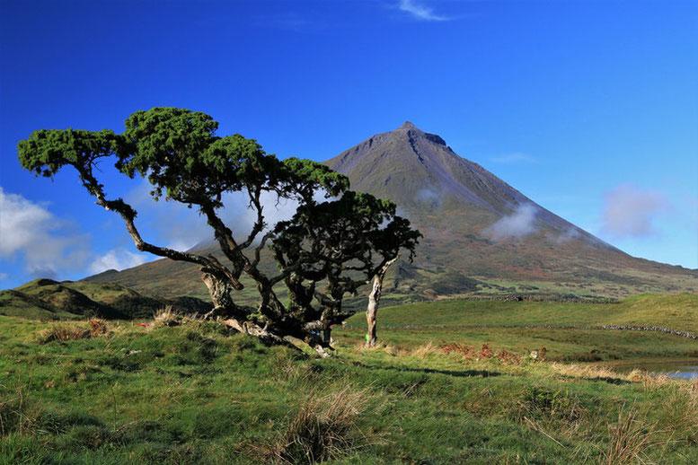 Azoren Inselhopping, Pico