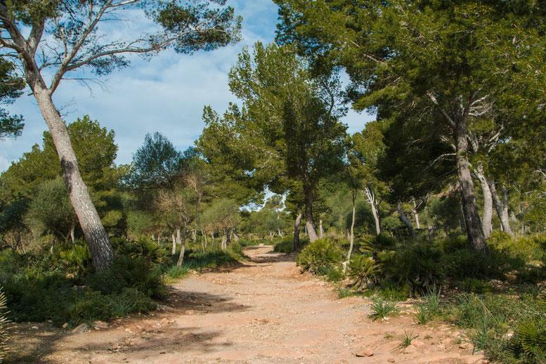 Von der Cala Agulla zur Cala Mesquida