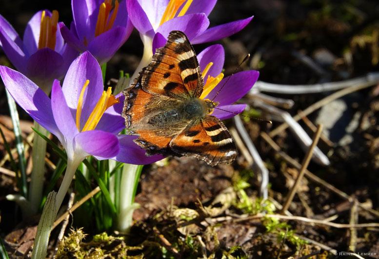 Frühlingserwachen in Stockum