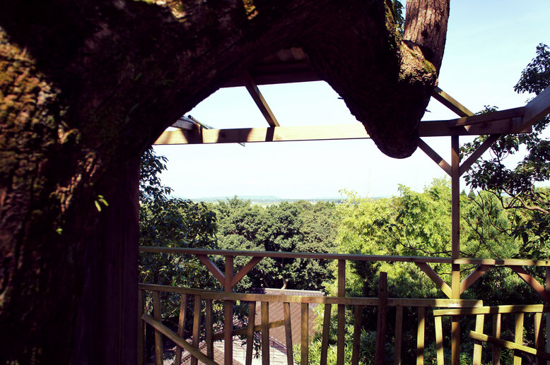 ツリーハウスから西を望む 遙か先に錦江湾。竹藪の向こうに下住工場。