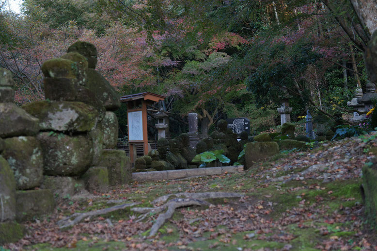 修復された石塔群と楓など
