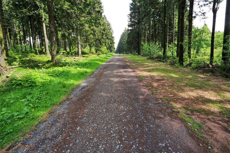 Ein breiter Waldweg führt vom NABU-Haus am Roten Moor hinauf zum Heidelstein.