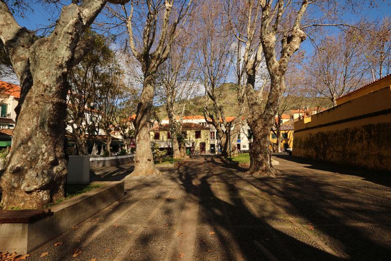 Von Platanen überkronter Fußweg in Machico an der Ostküste Madeiras.