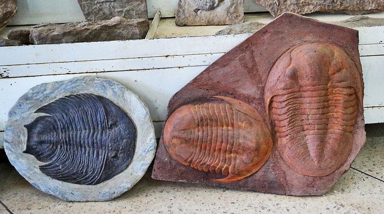 Diese herrlichen Trilobiten-Exemplare hätte Michael gerne mitgenommen, aber die Preise sind einfach unerschwinglich.