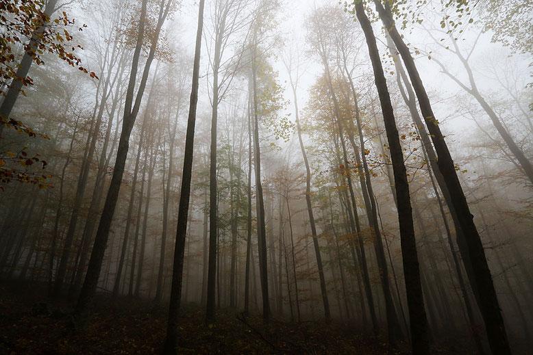 Nebelwald zwischen Prismenwand und Schweinfurter Haus im Herbst 2014.