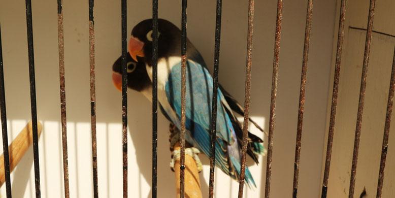 Hübsche Vögelchen, aber woher kommen sie und wie mag man sie bezeichnen?