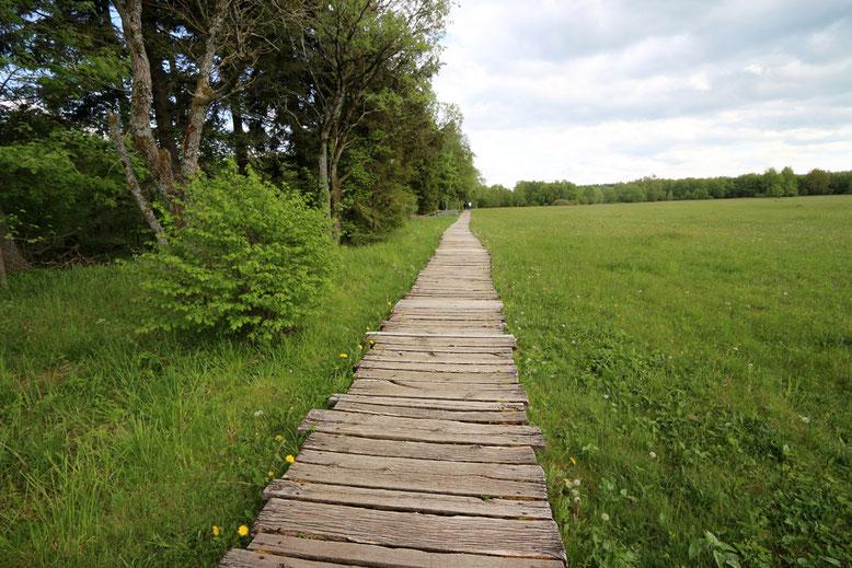 Der Naturlehrpfad führt zunächst entlang einer weit auslaufenden Wiesenfläche.
