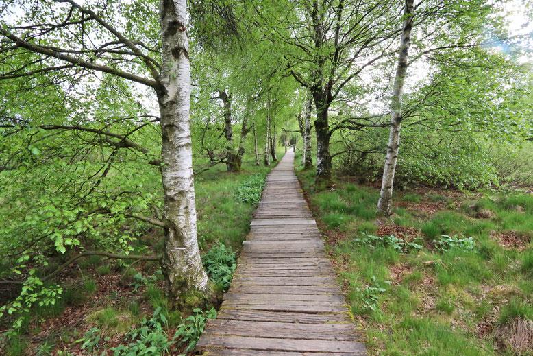 Später flankieren kleine Birkenwäldchen den Holzbohlenpfad.