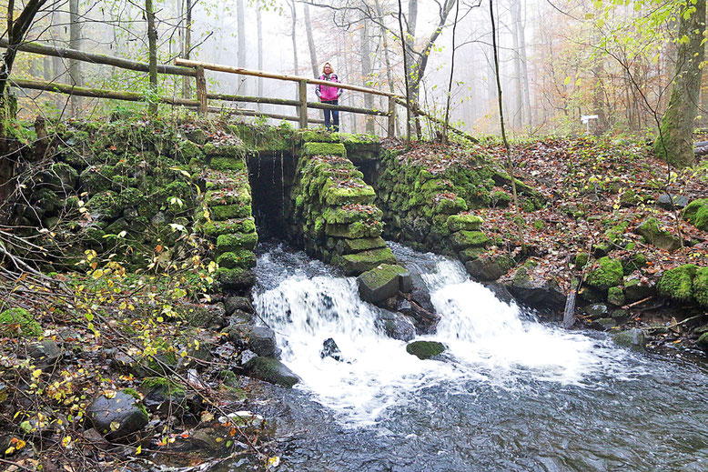 Nach der Brücke über den Elsbach, führt der Wanderweg das Elsbachtal hinauf.