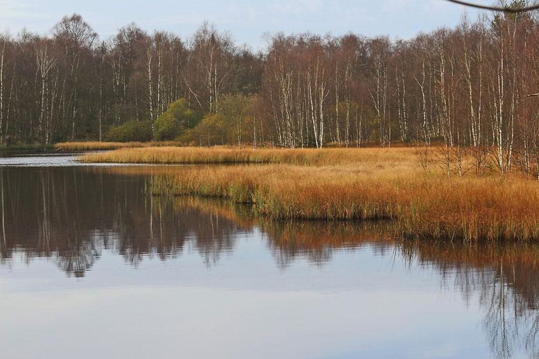Kleiner See am Südrand des Roten Moores im Herbst 2014.