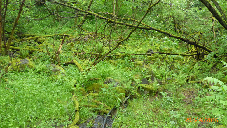 Vernässungszone oberhalb des Basaltssees .