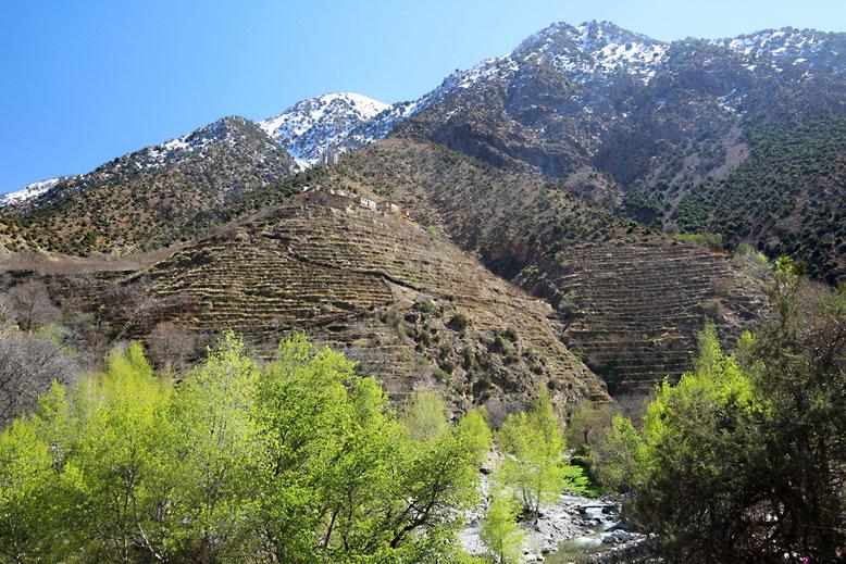 Terrassierte Felder an den Berghängen oberhalb des Ourika-Tals.