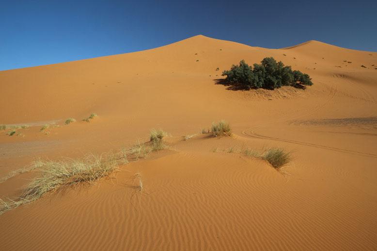 Zunächst ist der Weg noch schön flach und der Sand einigermaßen fest, so dass es sich noch recht gut über die ersten Anhöhen laufen lässt. Aber die Strecke zieht sich.