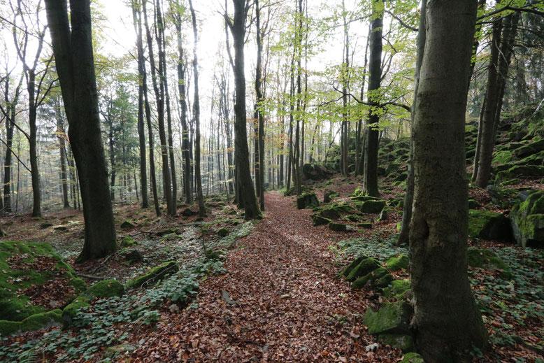 Schöner Fußweg durch den Hochwald unmittelbar unterhalb der Steinwand.