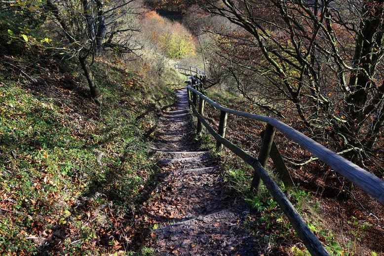 Weiterer Abstieg in Richtung des Buchenwäldchens nördlich des Guckaisees