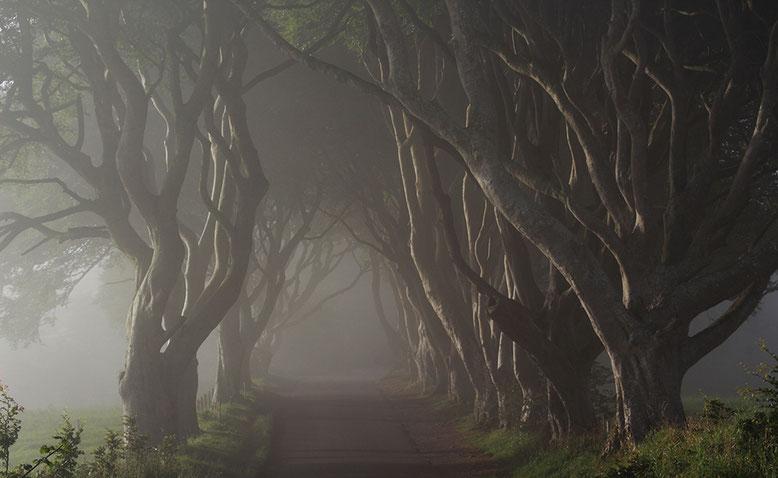 Erste Sonnenstrahlen durchdringen morgendliche Nebelschwaden über The Dark Hedges.
