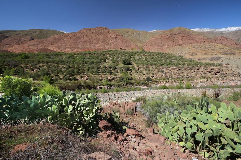 Talaue entlang des unteren Teils der Passstraße zwischen Tizi-n-Test und Marrakesch.