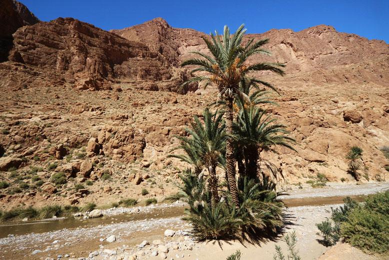 Palmenensemble im Todra-Tal.