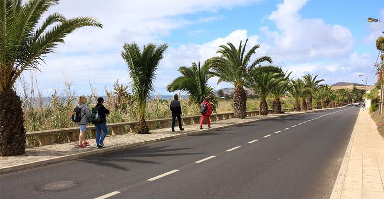 Palmengesäumte Straße in Porto Santo.