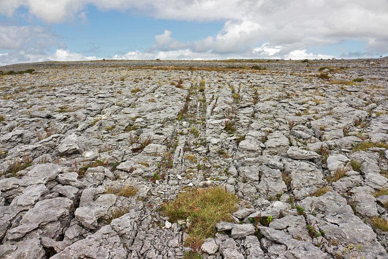 Karstlandschaft im Burren Nationalpark unweit des Hügelgrabes des Poulnabrone-Dolmen.