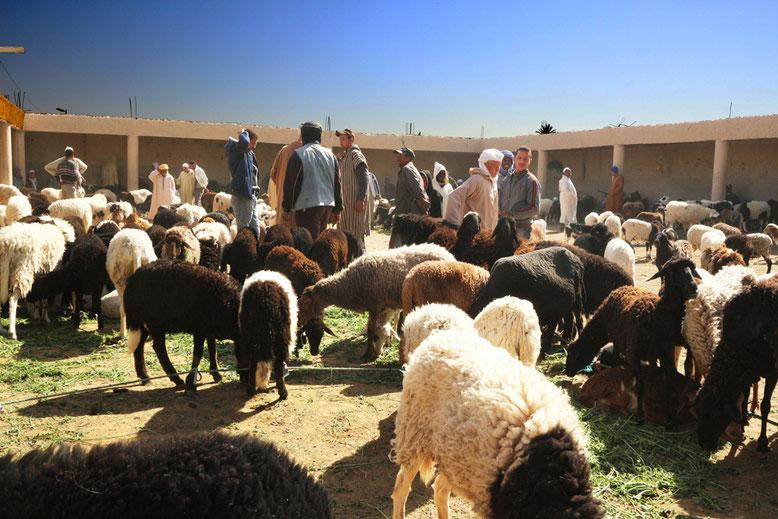 Unsere letzte Station für heute: Schafmarkt am Rande der Souks. Uns reicht es, wir haben erst einmal genug gesehen und kehren zurück zu unserer Unterkunft an den Sanddünen.