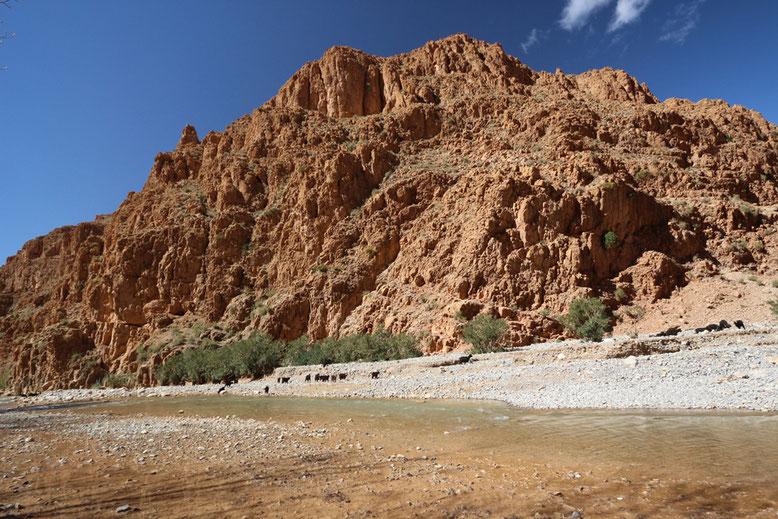 Nach dem Abweiden des Hochplateaus eilt die Ziegenherde inklusive Hirten mit atemberaubendem Tempo die steilen Abhänge hinunter zum Dades-Fluss.