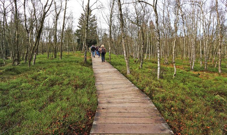 Wie im Schwarzen Moor sind auch hier über längere Strecken Holzbohlenstege verlegt.