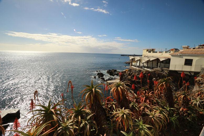 Schöne Aussicht im Osten Funchals mit Aloe africana.