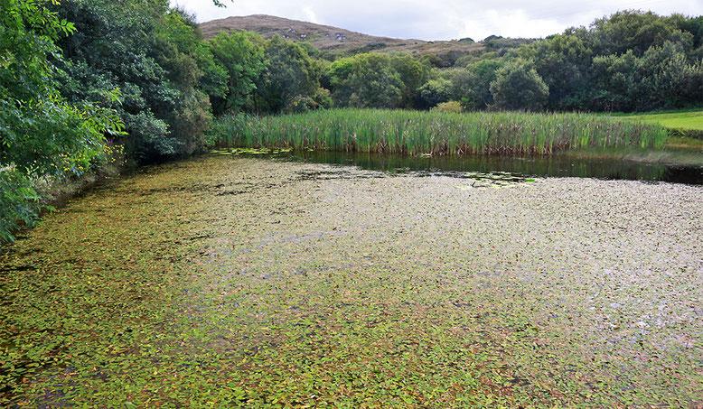 Teich vor dem Visitorcenter des Connemara NP.