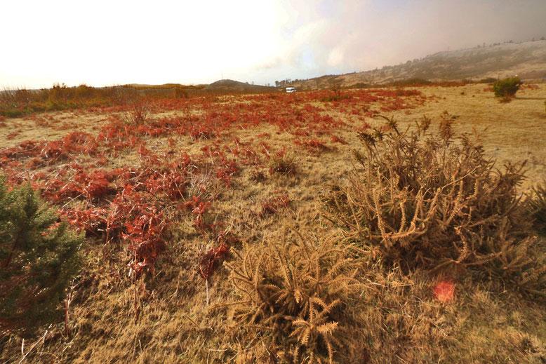 Farne und niedere Gehölze am Rande des Weges zum Pico Arieiro.